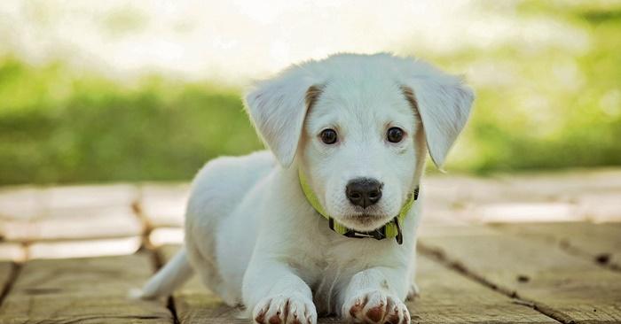 how to adopt pet singapore