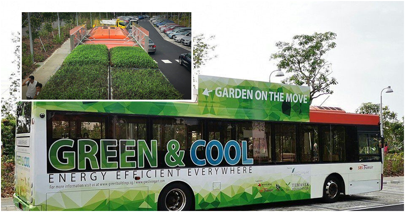 SBS Transit Buses Promote Rooftop Garden as Part of Green Initiative